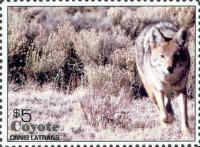 Enlarged view of 2006 $5 Coyote (Canis Latrans) Wildlife Stamp